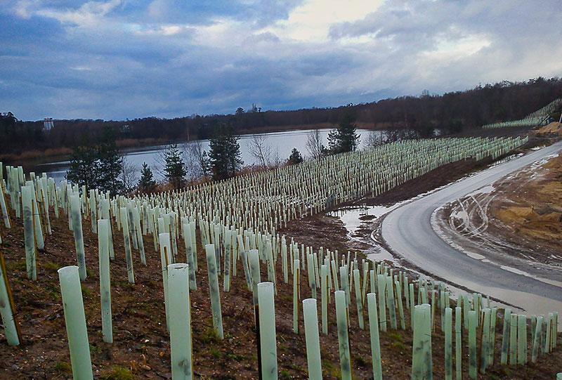 Aufforstung Krötseeschneise 2011