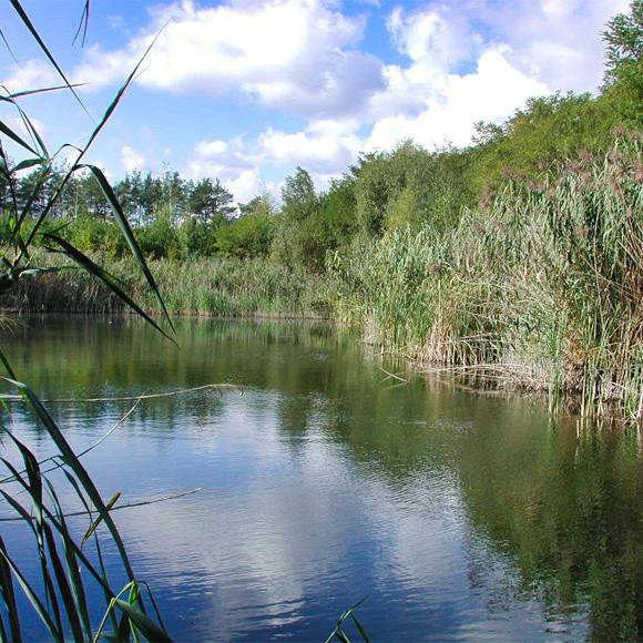Langener Waldsee, Renaturierung nach 12 Jahren